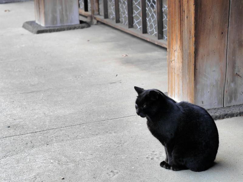 犬走りに黒猫2