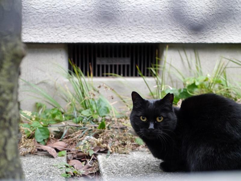 民家敷地の黒猫2