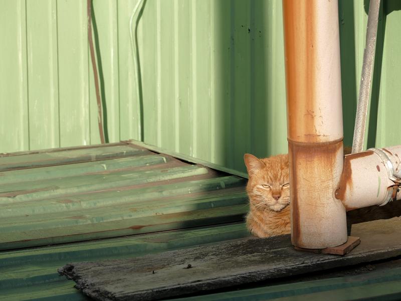 日が当たる所に茶トラ猫3