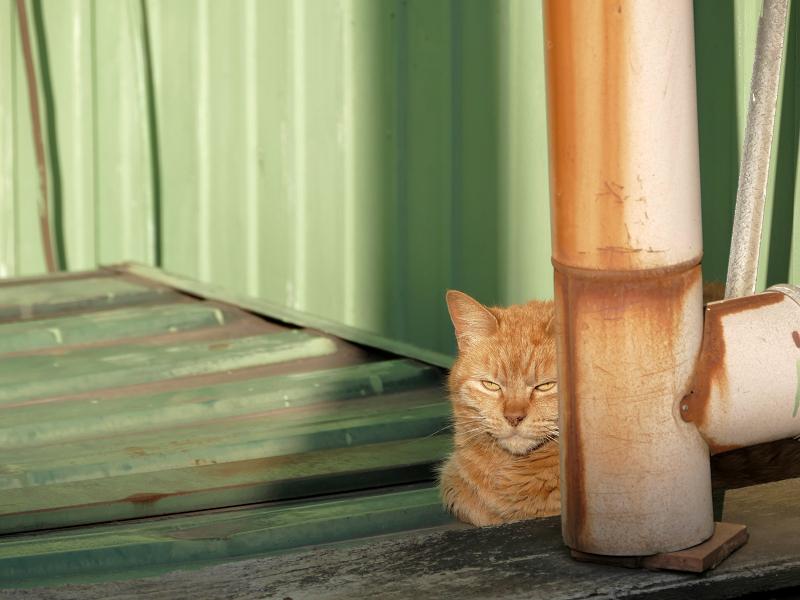 日が当たる所に茶トラ猫4