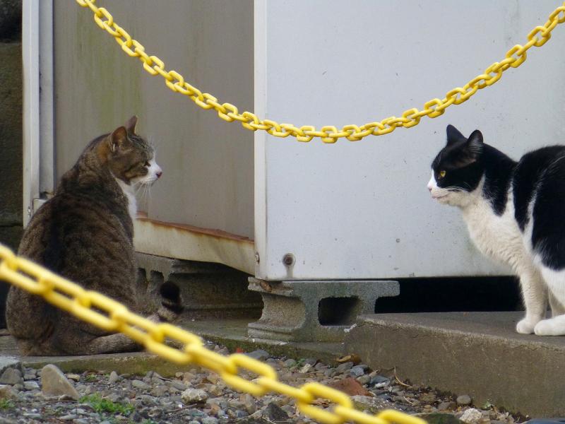 空地の奥の猫たち4