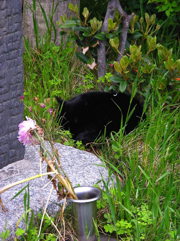 石碑の隣で寝ていた黒猫1