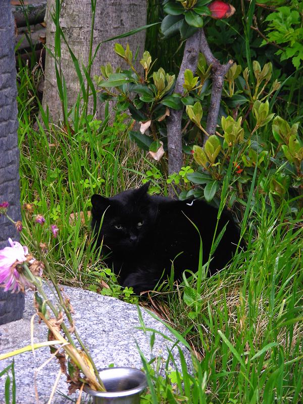石碑の隣で寝ていた黒猫2