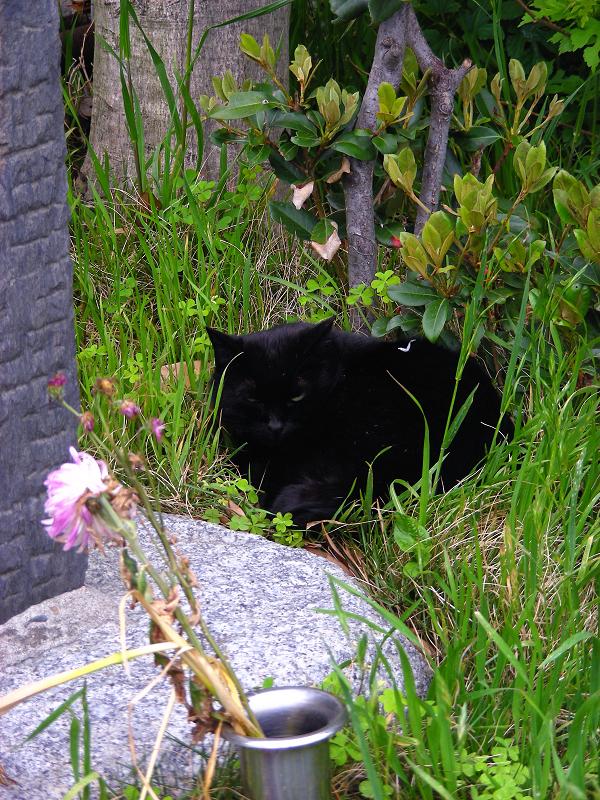 石碑の隣で寝ていた黒猫3