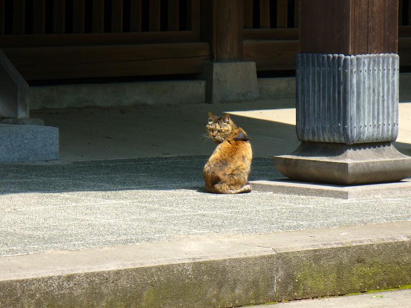 古いお寺のサビ柄猫2