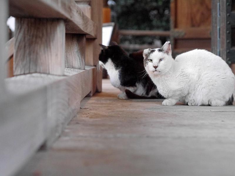 古堂濡れ縁の仲良し猫たち3