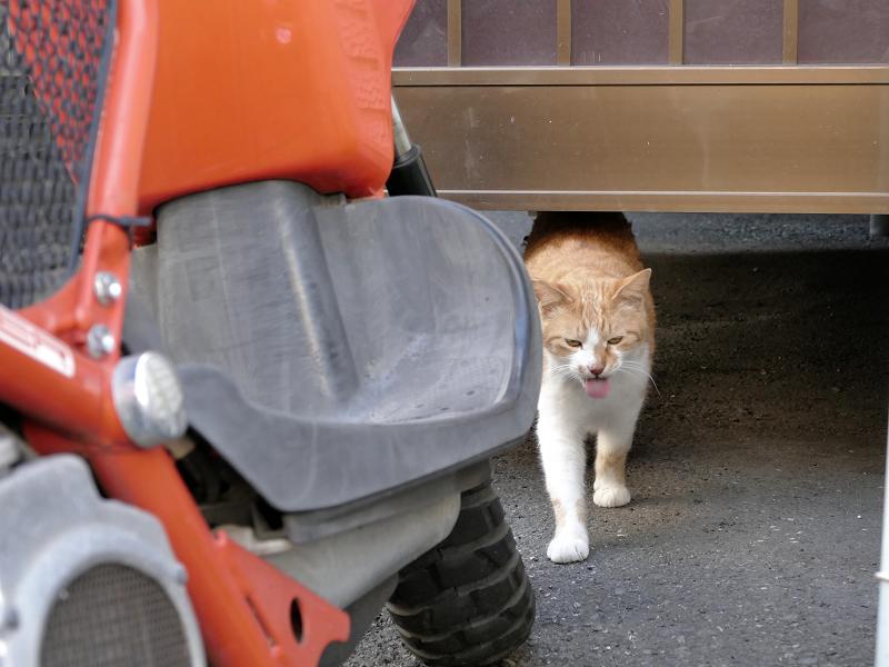 アパートの下から出てきた茶白猫3