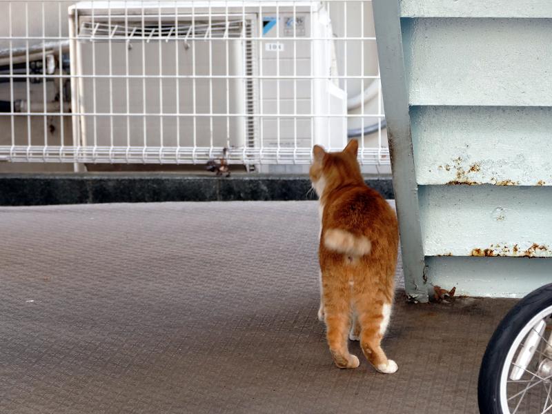 階段の裏側に擦り付ける茶白猫3