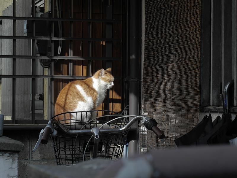 玄関ドア前で待っている茶白猫
