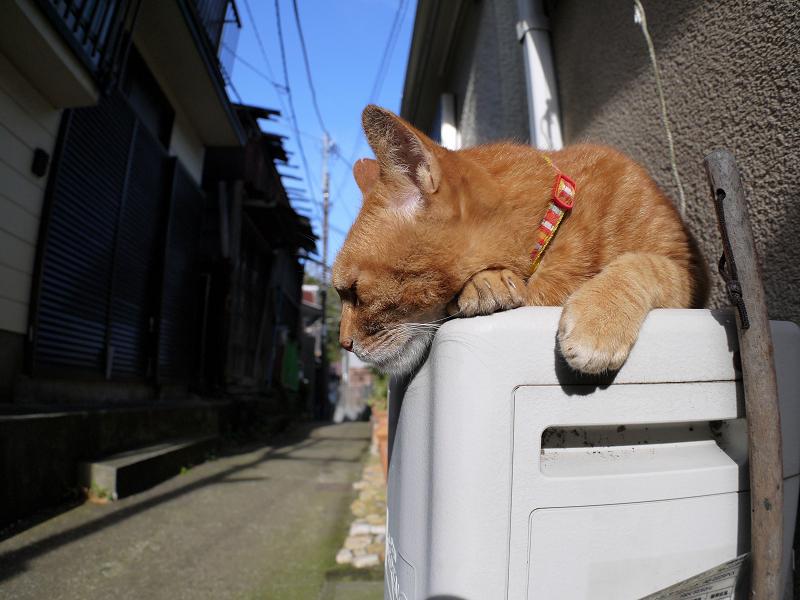 鼻をツンツンされた茶白猫3