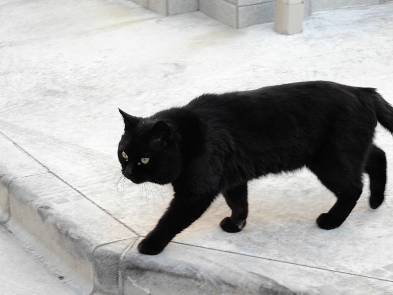 グレーコンクリに黒猫3