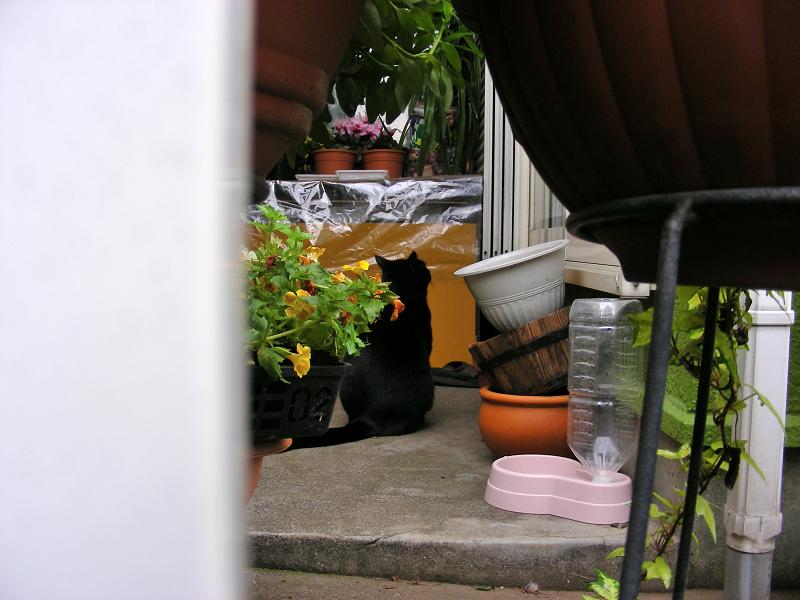 賑やかな玄関先の黒猫1
