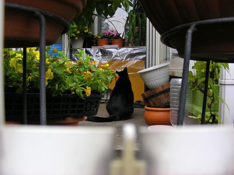 賑やかな玄関先の黒猫2