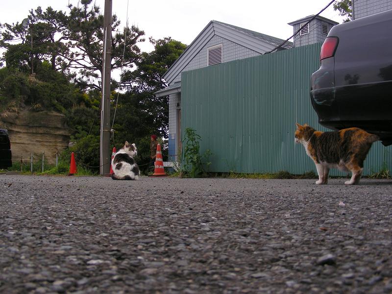路地を歩く三毛猫3