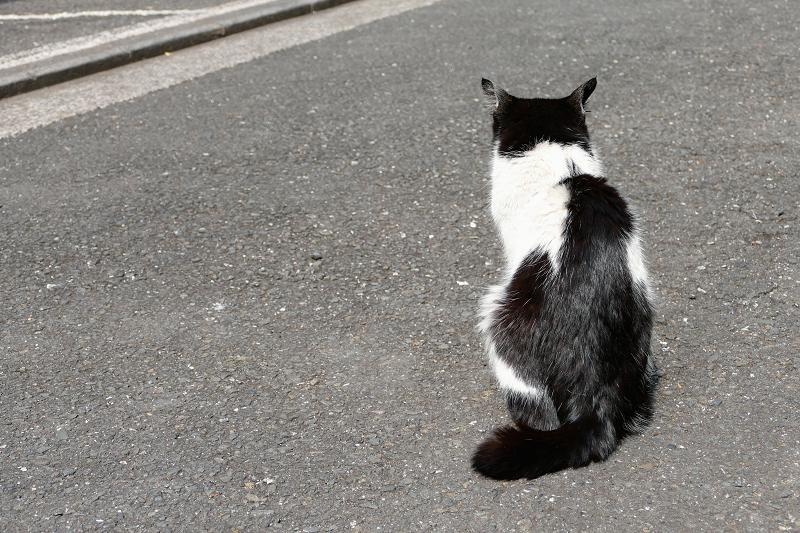 黒白猫の後ろ姿1