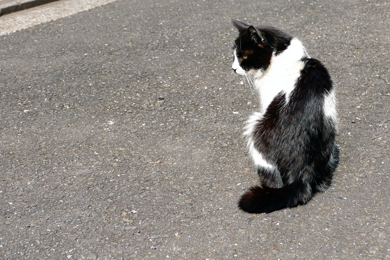 黒白猫の後ろ姿2