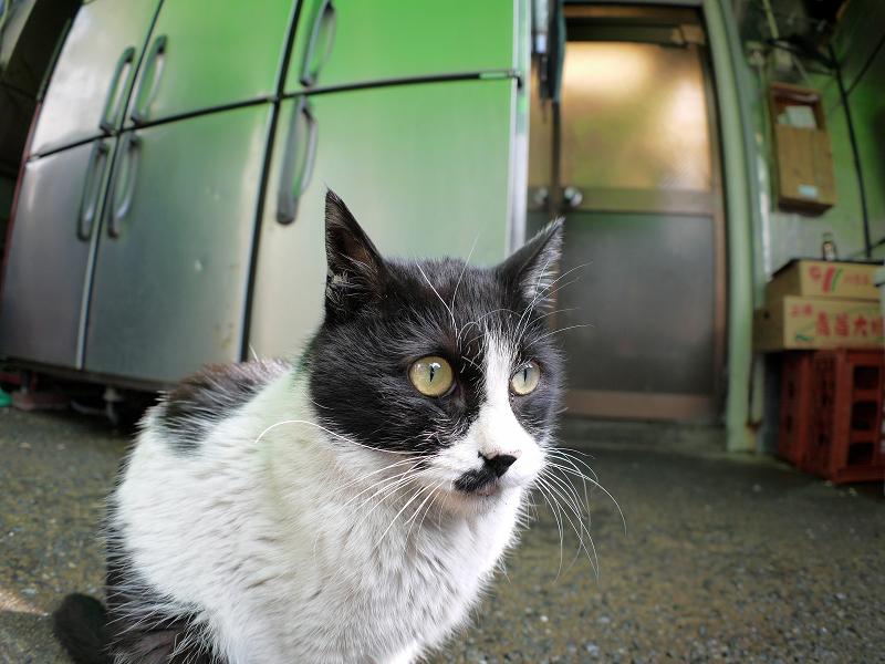 ビックリ顔の黒白猫1