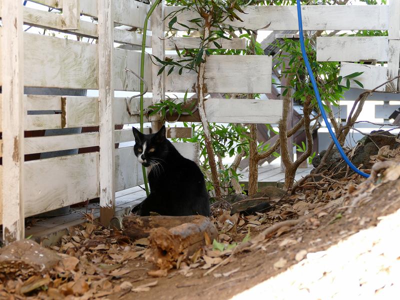 隅っこの黒白猫1