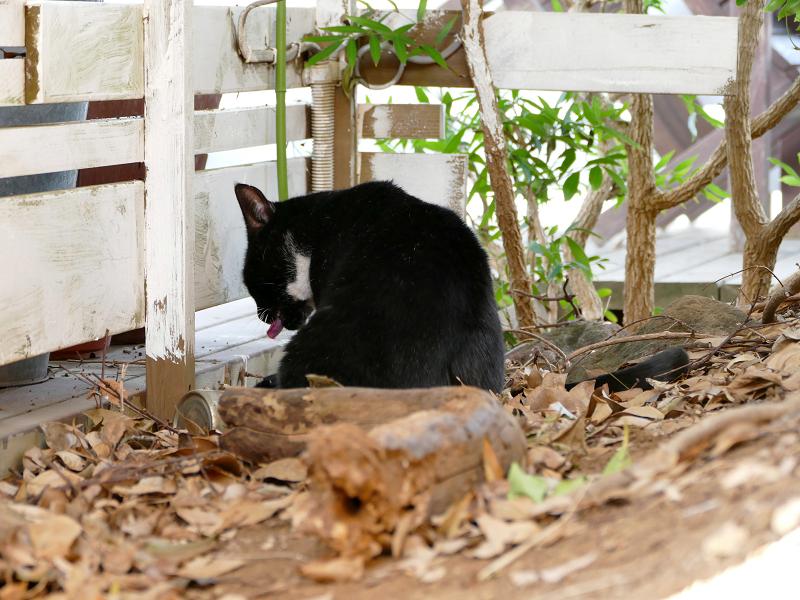 隅っこの黒白猫3