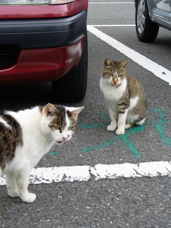 青空駐車場の猫たち