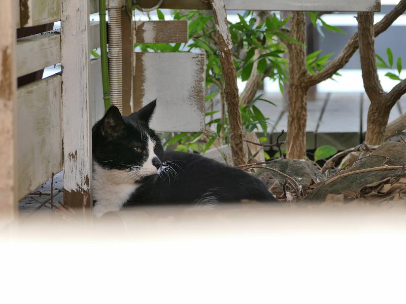 奥の隅っこの黒白猫1