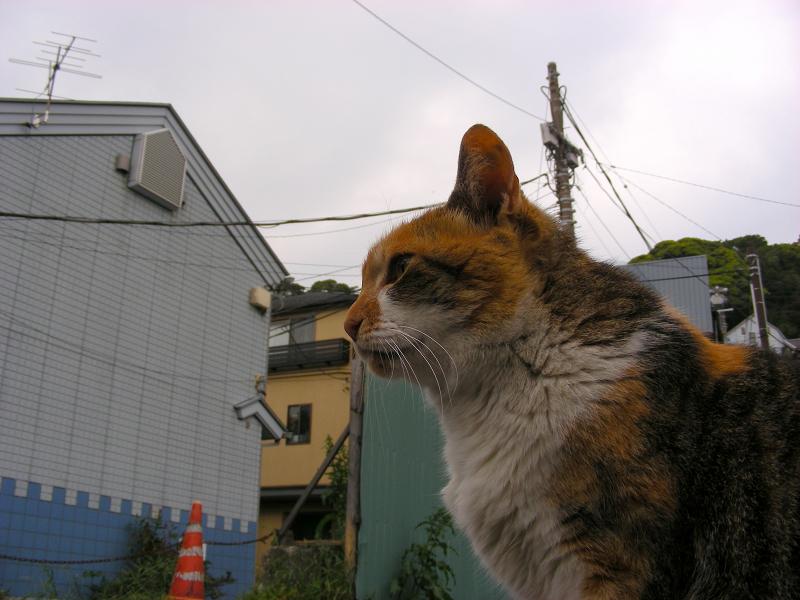 ローアングル駐車場の猫2
