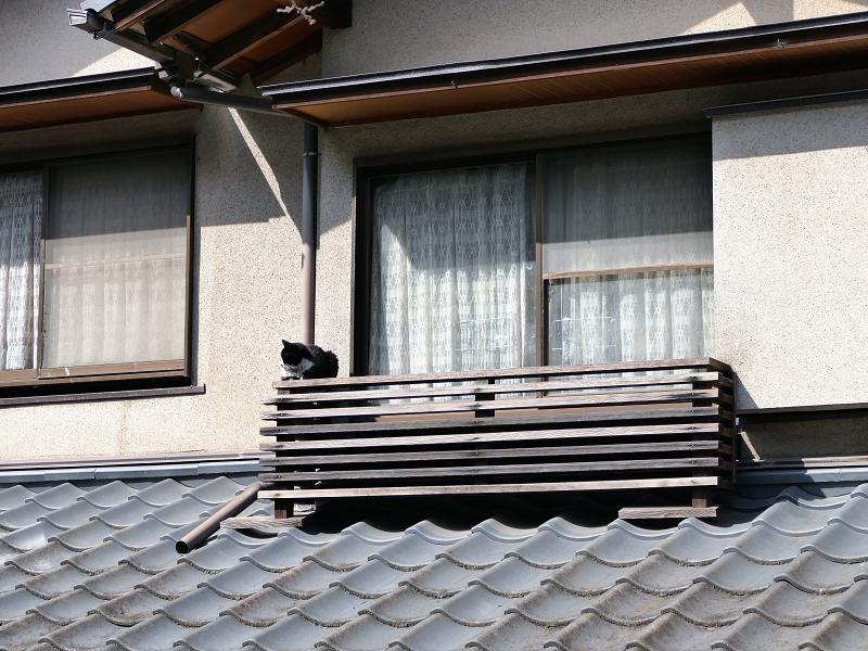 窓の外の猫1