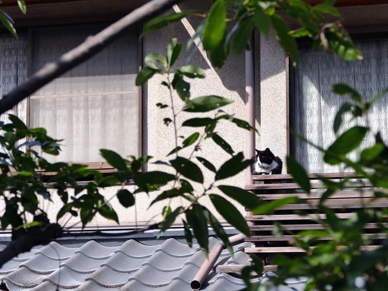 窓の外の猫2