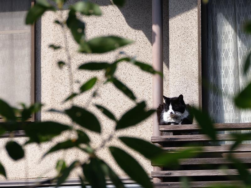 窓の外の猫3