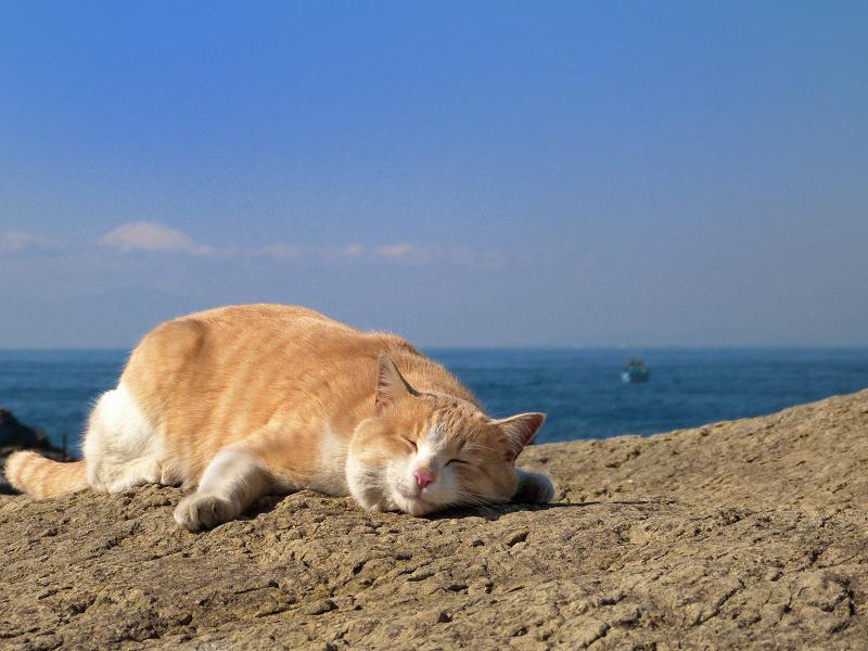 青空と海と富士山と茶トラ猫