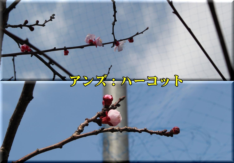 1harcot190317_046.jpg