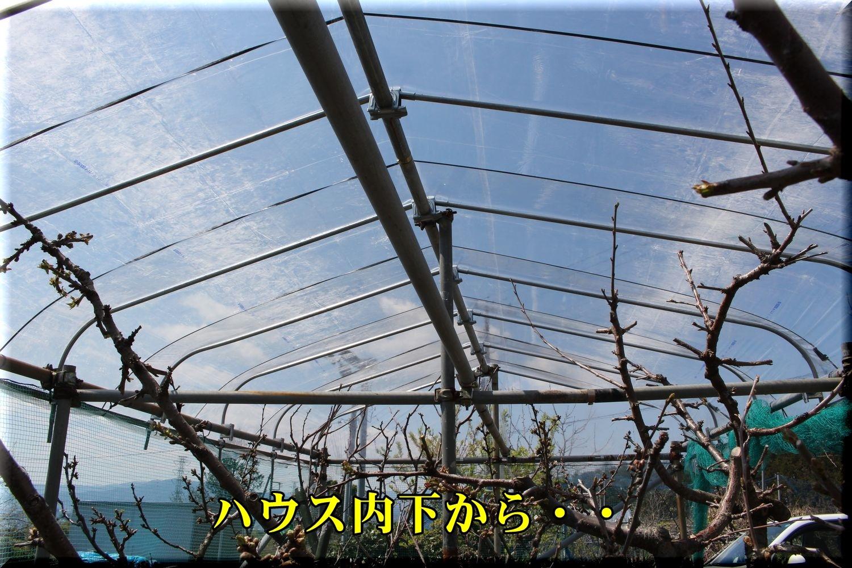 1house190403_006.jpg