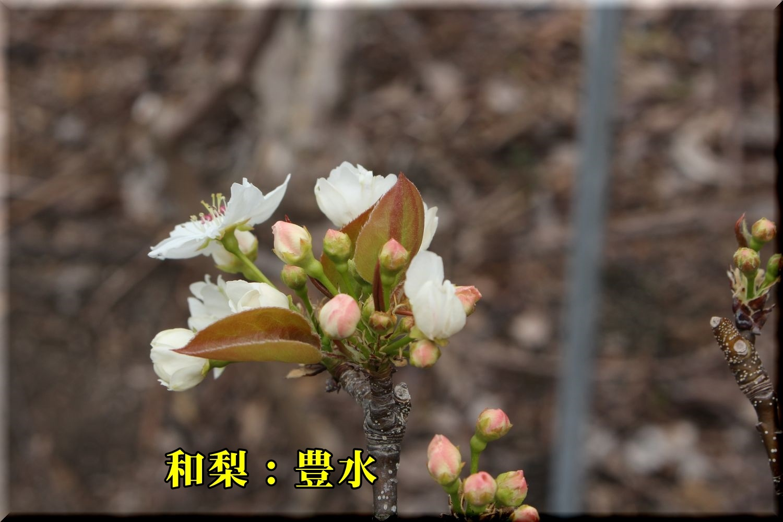1housui190329_027.jpg