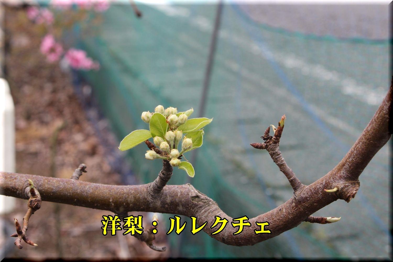 1lurecuche190329_087.jpg