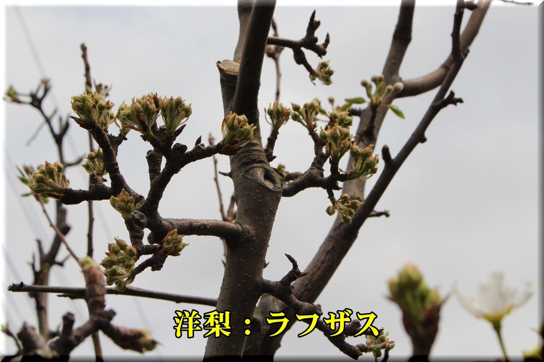 1rafuzasu190329_084.jpg