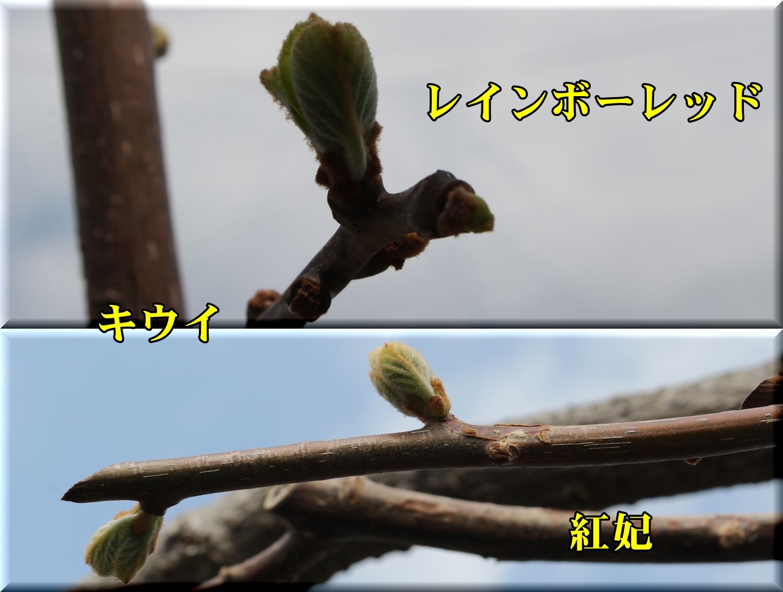 1rainbow_kouhi190317_060.jpg