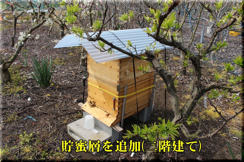 1seiyoumitubat190325_003.jpg