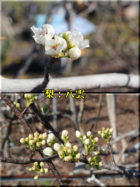 1yakumo190324_045.jpg