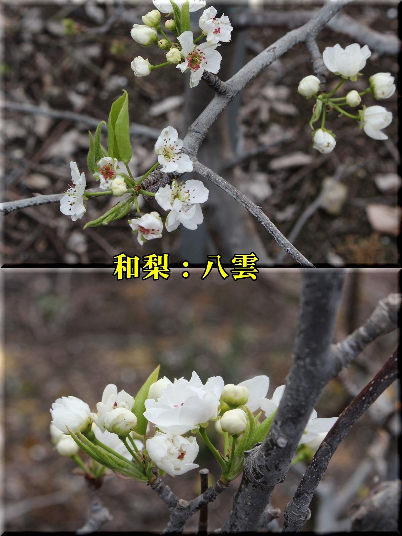 1yakumo190329_014.jpg