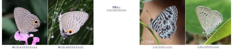 C-11.jpg