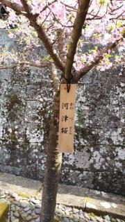 久能山_014