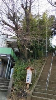 生田周辺の桜_007