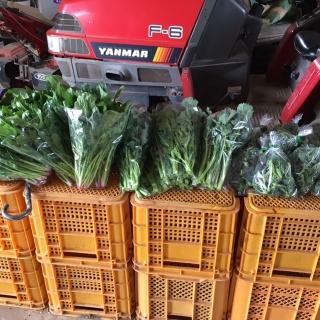 手作り野菜_01