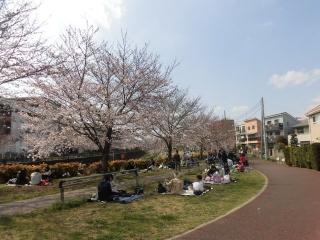 三沢川の桜_004