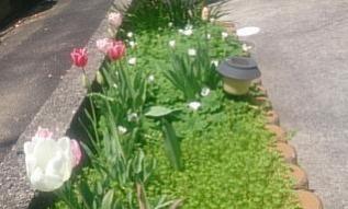 flower@20190422001.jpg