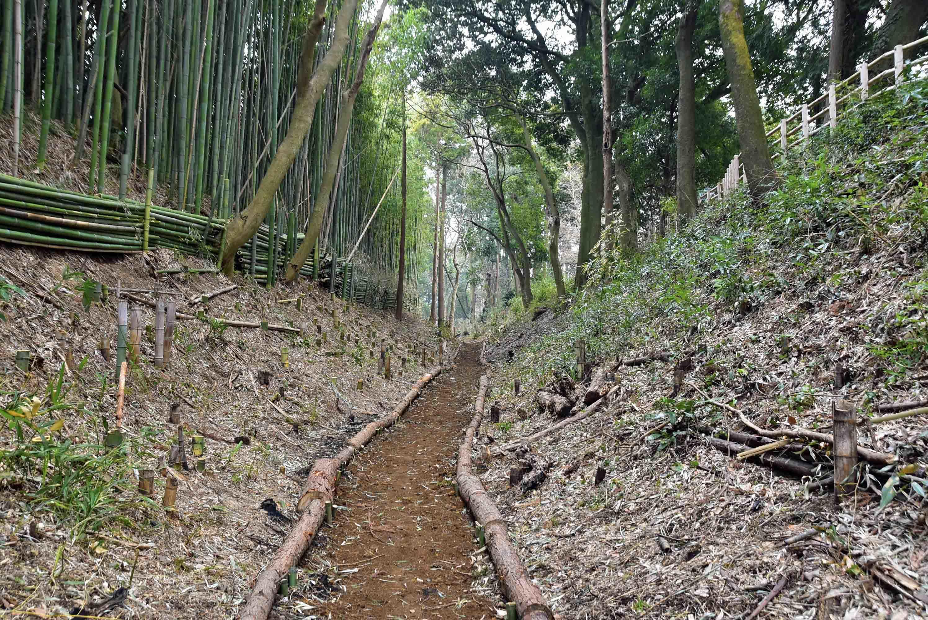 額田城 郭3東側の堀