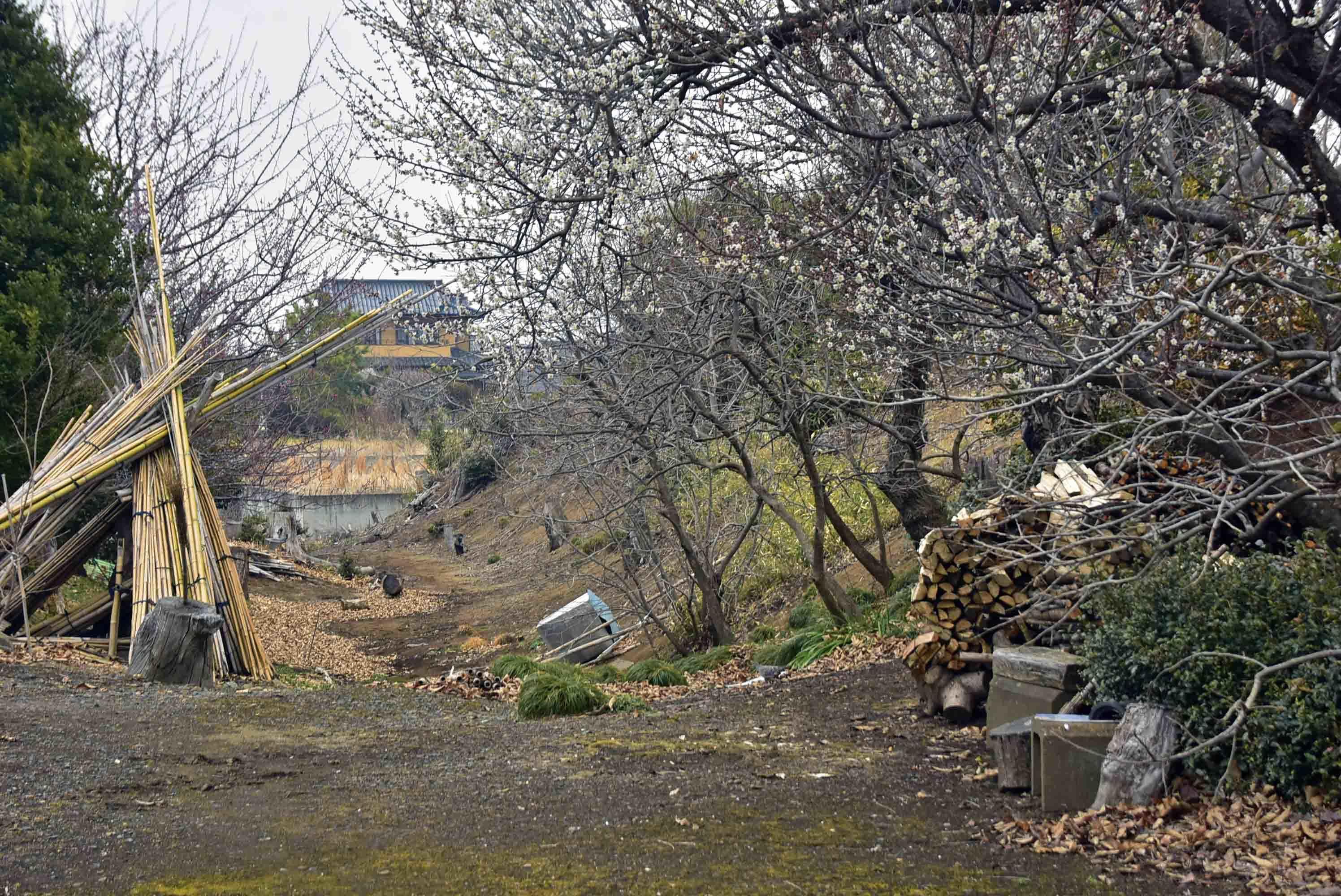 額田城 郭4北西の土塁、堀