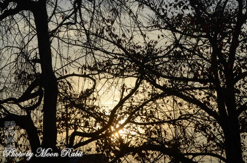 夕暮れの木々 愛媛県西条市原の前