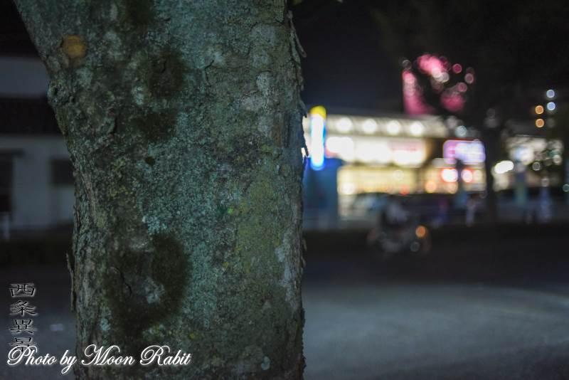 街路樹の幹 古川玉津橋線 愛媛県西条市神拝