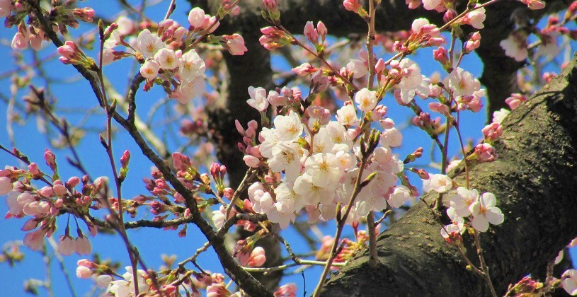 shimizuyama190324-107.jpg
